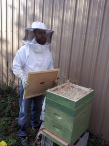 Hive Quilt
